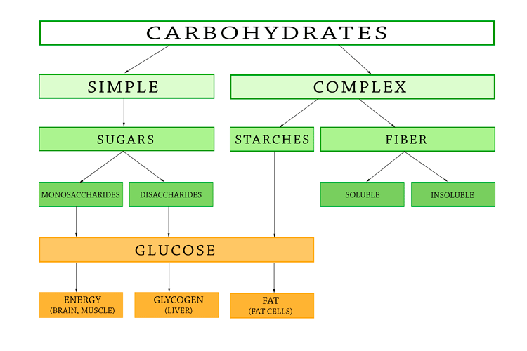 Carbohydrates For Weight Loss Make The Right Choices
