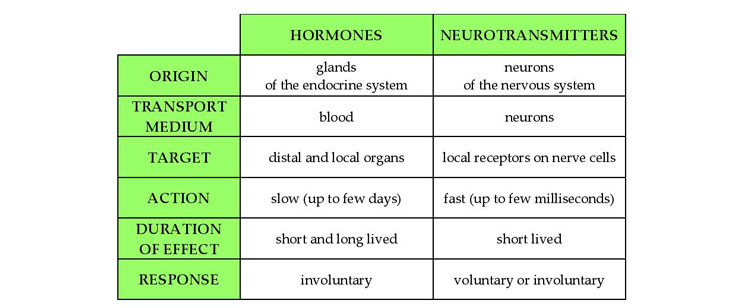 hormones-neurotransmitters