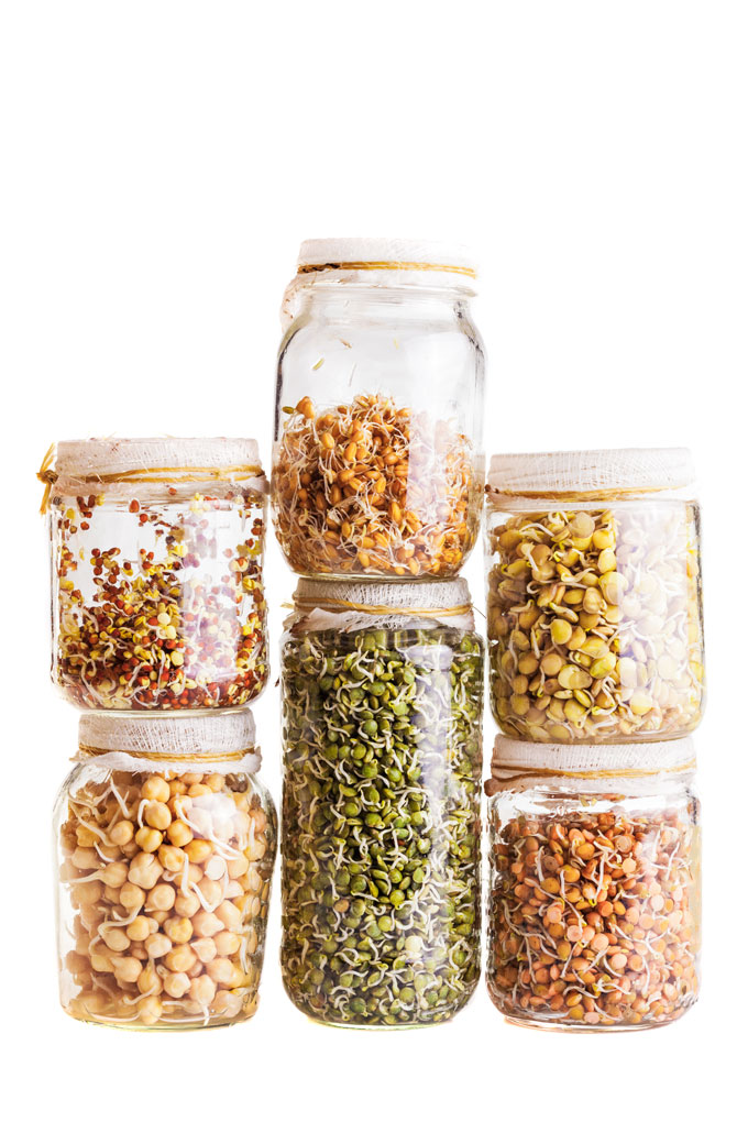 sprouted legumes in a jar
