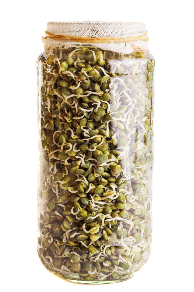 sprouting legumes, grains, nuts, seeds